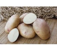 Картофель Ажур (15 шт)