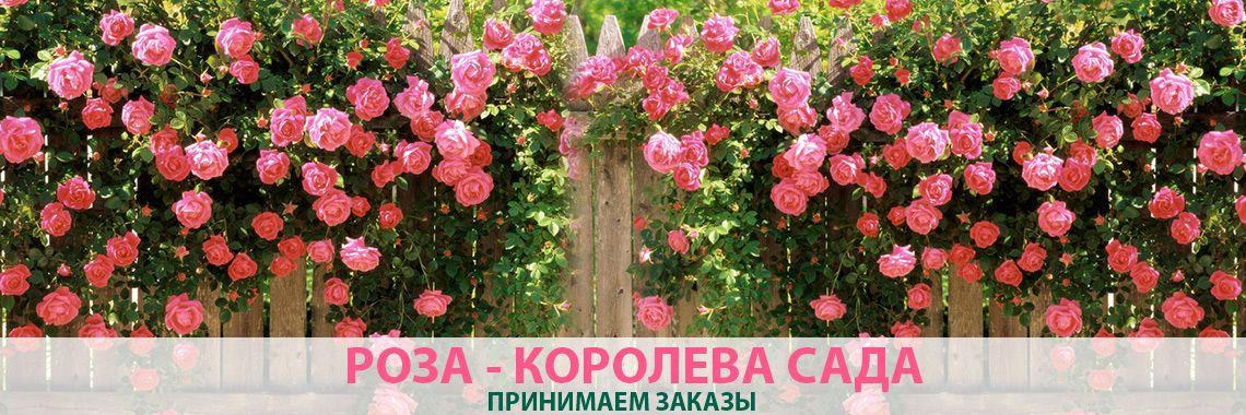 Розы (более 60 сортов)