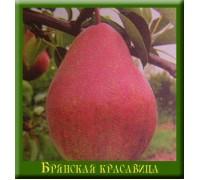 Груша Брянская красавица