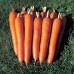 Морковь Император