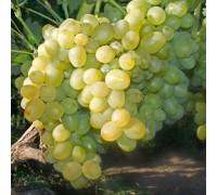 Виноград Суперэкстра
