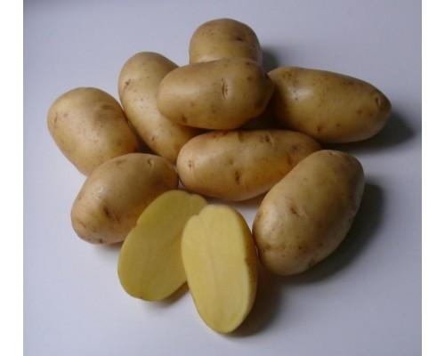 Картофель Импала (15 шт)