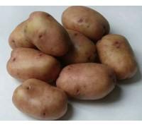 Картофель Жуковский ранний (15 шт)