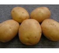 Картофель Лидер (15 шт)