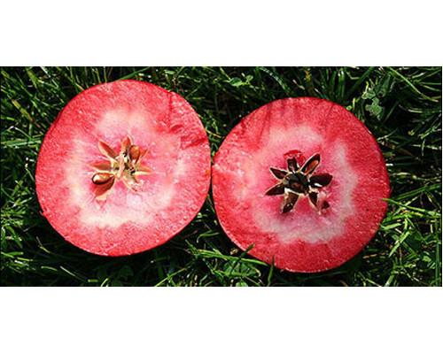 Набор  Красномякотные яблони (Ред Кетти+Ред Пэшн, всего  2 саж)