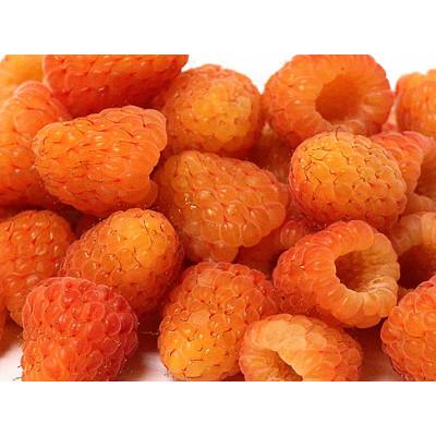 Саженцы Малина Оранжевое чудо