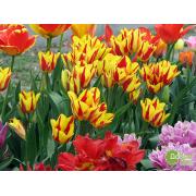 Многоцветковые