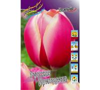 Тюльпан Русская Принцесса